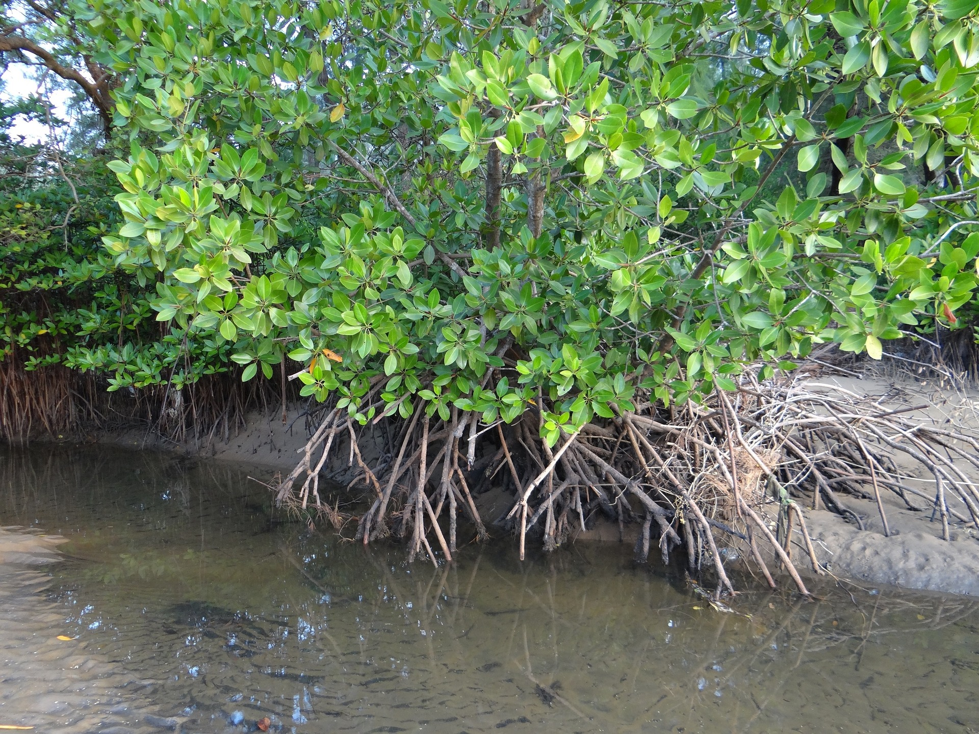Situation Analysis for Mangroves for the Future: Understanding the Resilience of Coastal Systems